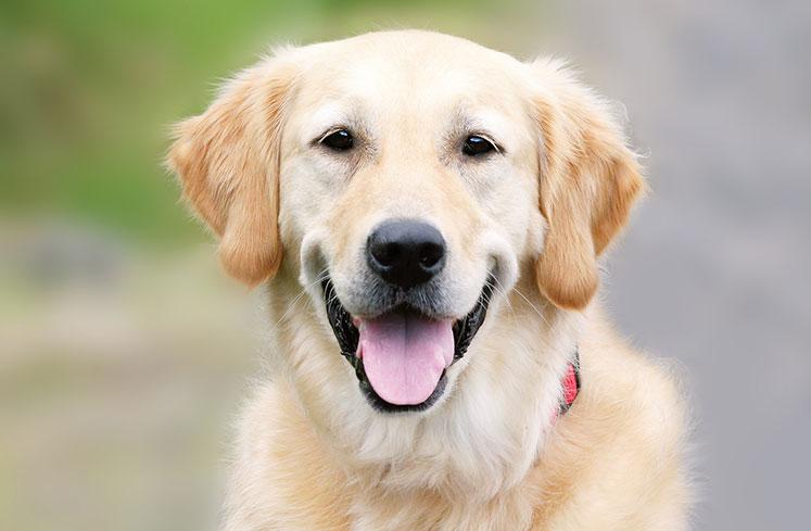 Pets Corner's Charities